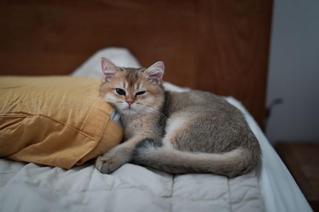 อาบน้ำแมว